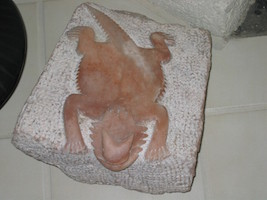 Horned Toad Alabaster